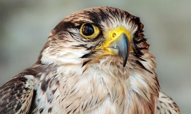 Aigle regardant sa proie avant de voler