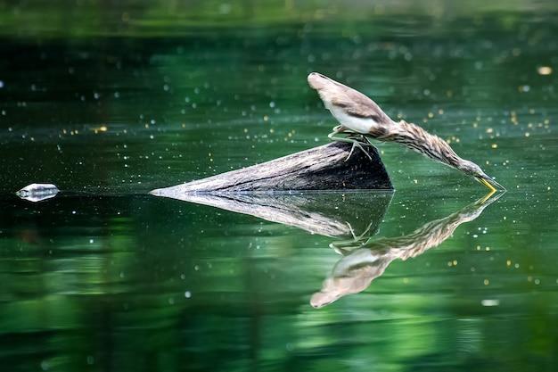 Aigrette perchée sur une branche au milieu de l'eau.