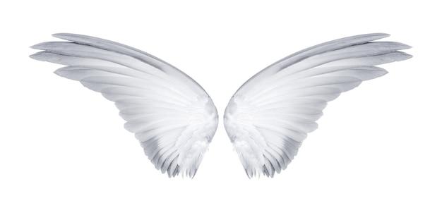 Ailes d'oiseaux isolés sur blanc