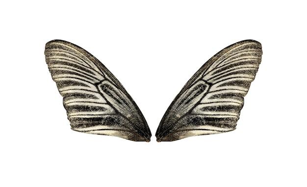 Ailes de papillon isolés sur blanc