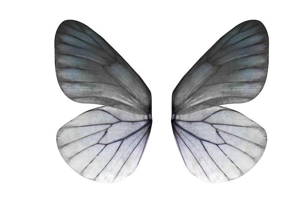 Ailes de papillons tropicaux isolés sur fond blanc.