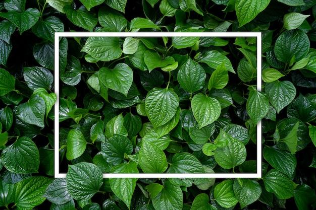 Aimer le concept de la terre. fond de feuille verte