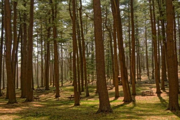 Aire de pique nique dans la forêt