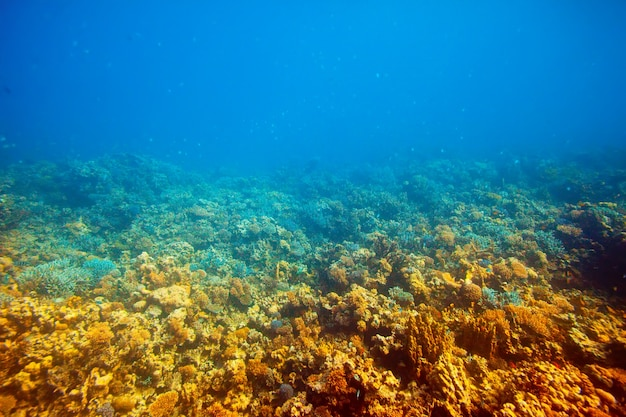 Aire de récif corallien