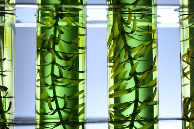 Algues dans les expériences scientifiques
