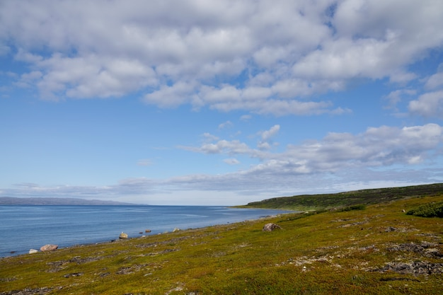 Algues jetées à la mer, rivage de l'océan arctique, péninsule de sredniy