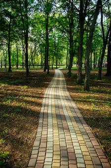 Allée, allée dans le parc de la ville au soleil
