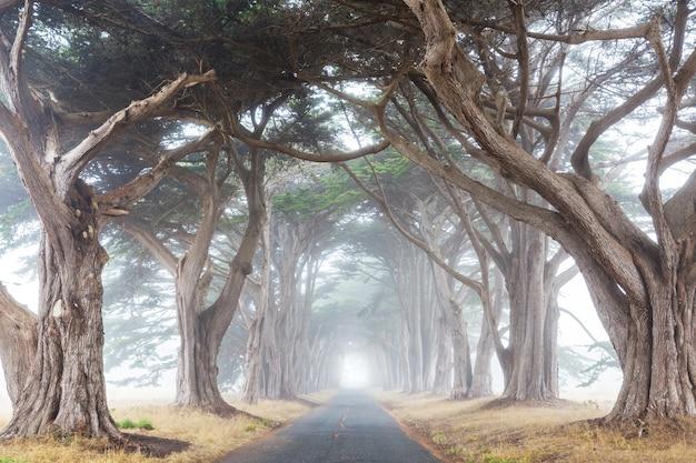 Allée d'arbres brumeux par temps brumeux.