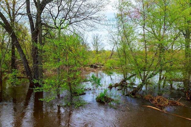 Allée d'arbres inondée après la pluie.