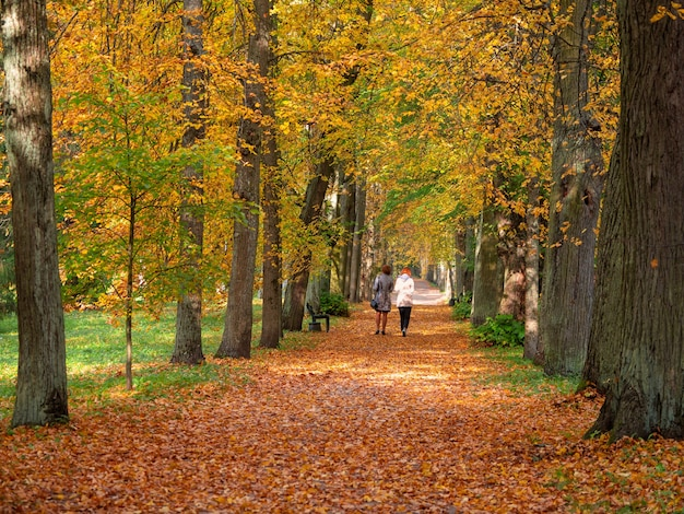 Allée d'arbres rouges dans le parc pavlovsky en automne, pavlovsk, saint-pétersbourg, russie. marcher les gens en automne.
