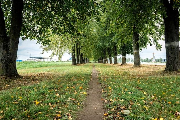 Allée d'arbres verts, chemin pour se promener au grand air à l'extérieur de la ville.