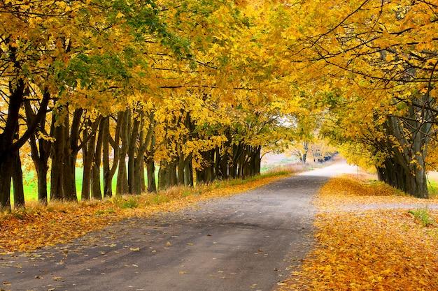 Allée d'automne à la campagne