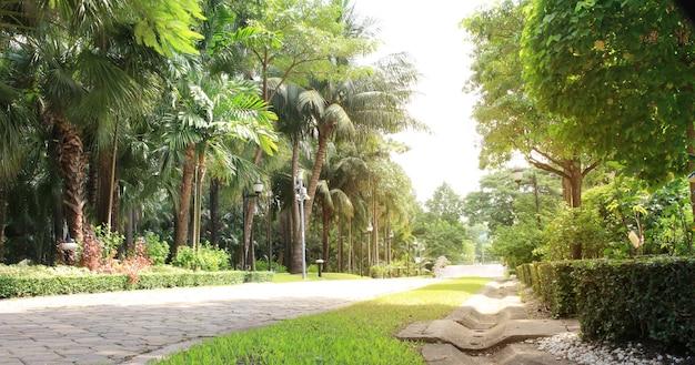 Allée du jardin dans le parc des arbres verts