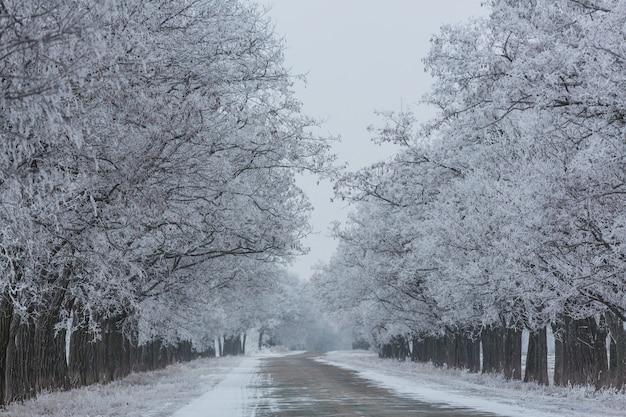 Allée d'hiver