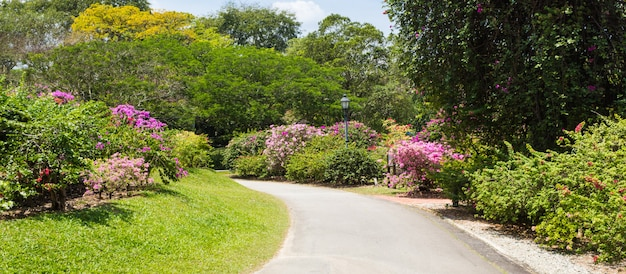 Allée de jardin avec plantes à fleurs