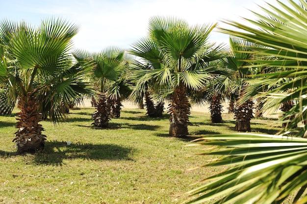 Allée de palmiers sur mer