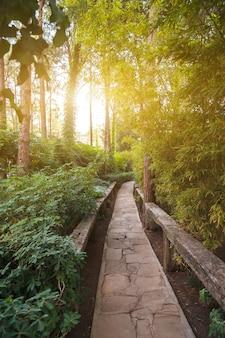 Allée parmi les plantes sauvages au coucher du soleil