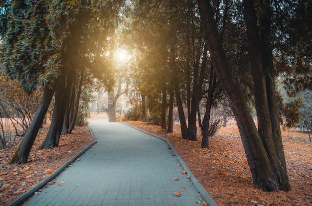 Allée, sentier du parc des cyprès à la fin de l'automne