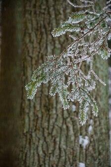 Allée sinueuse dans la forêt d'hiver