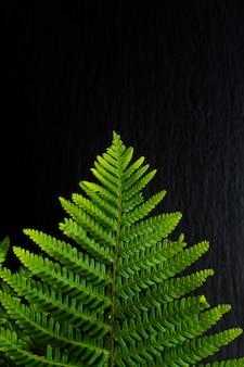 Aller fond vert fougères partent sur fond de pierre ardoise noire