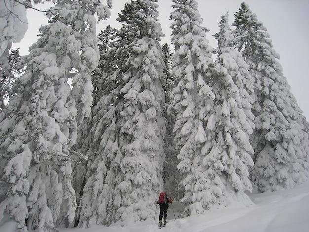 Allgu neige hiver ski hivernal des arbres forestiers touristiques