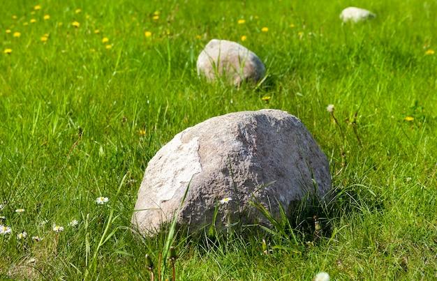 Allongé sur un champ avec des pierres d'herbe verte utilisées pour la décoration, le printemps