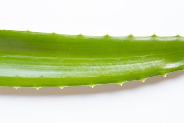 Aloe vera sur blanc