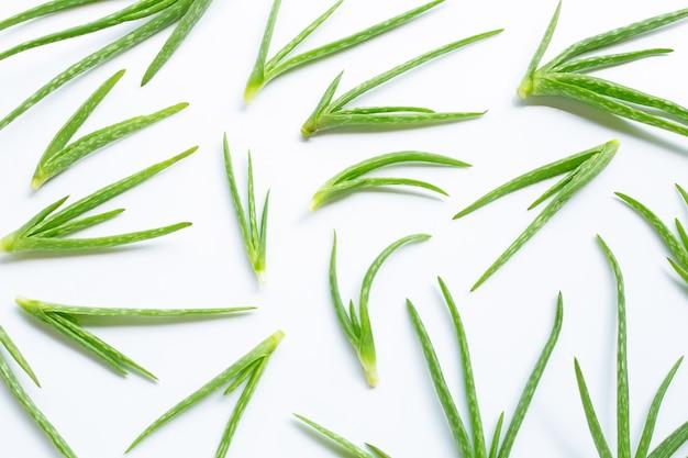 L'aloe vera est une plante médicinale populaire pour la santé.