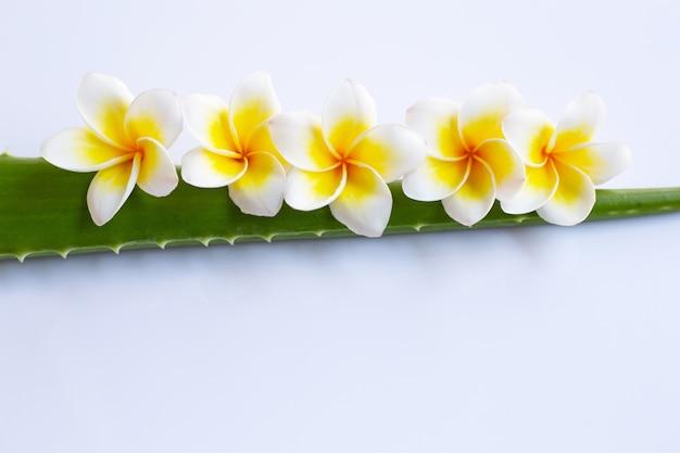 Aloe vera et fleur de plumeria sur fond blanc.