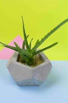 Aloe vera succulent pot de béton fond clair