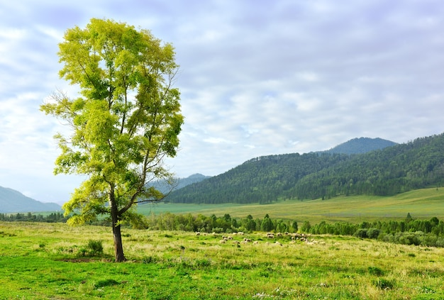 Alpage sur le fond d'un ciel bleu nuageux sibérie russie