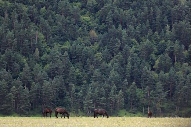 Alpage en forêt pour chevaux.