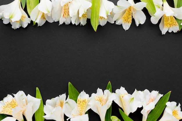 Alstroemeria blanc plat avec copie-espace
