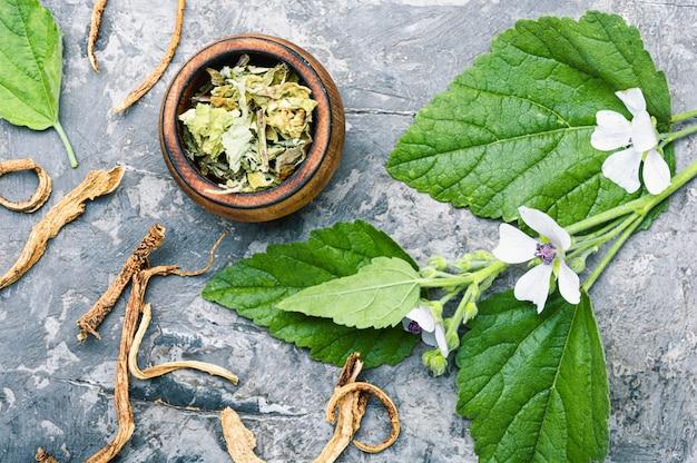 Althaea plante médicinale