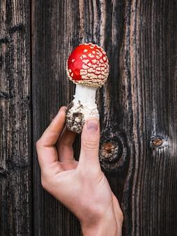 Amanite rouge aux champignons vénéneux (muscaria) sur fond de planches de bois vieillies. original et étonnant dans la nature
