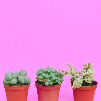 Amant de cactus art conceptuel minimal plantes sur rose ensemble de cactus dans un pot