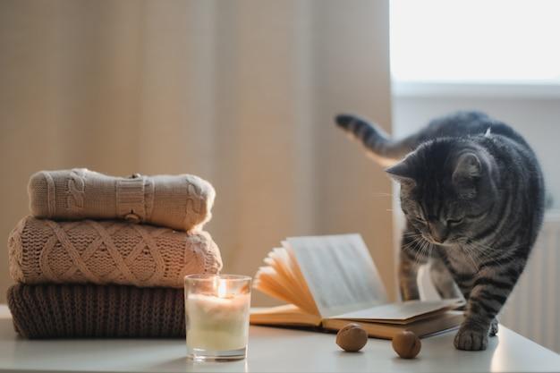 Ambiance chaleureuse à la maison et nature morte avec un livre de bougies pour chat et des chandails