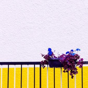 Ambiance colorée. fleur en pot. art minimal