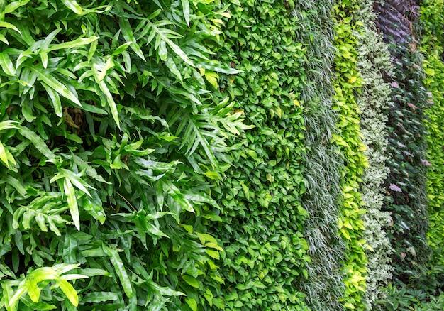 Aménagement paysager vertical décoratif dans le parc.