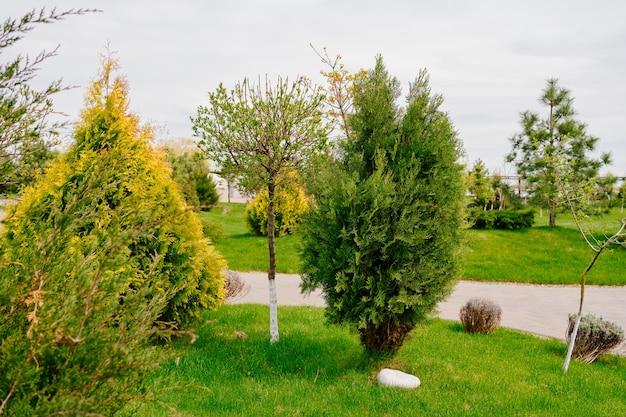 Aménagement de pelouse avec plantation d'arbres et d'arbustes