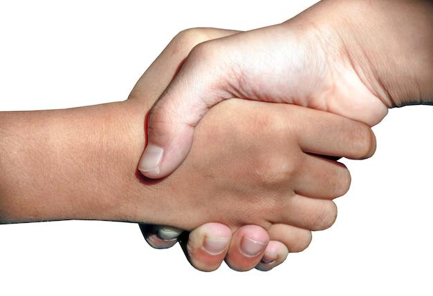 Amis, partenaires se serrant la main isolés sur fond blanc. concept de pardon et de salutation