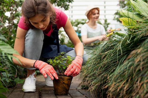Amis prenant soin de leurs plantes dans une serre
