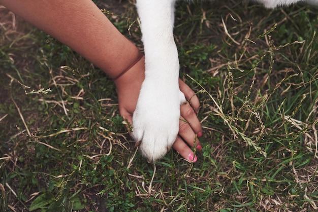 Amitié entre l'homme et le chien - serrer la main et la patte