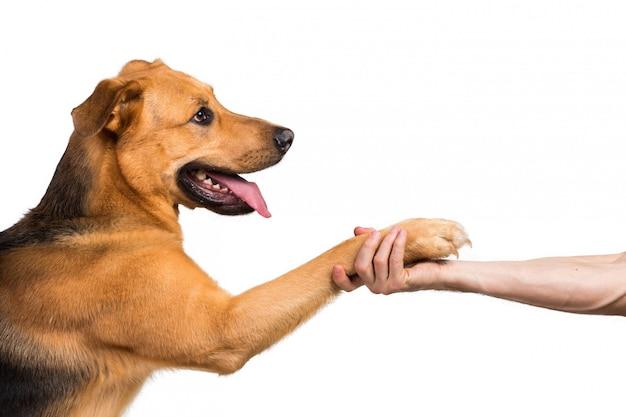 Amitié et partenariat entre l'homme et le chien en intérieur