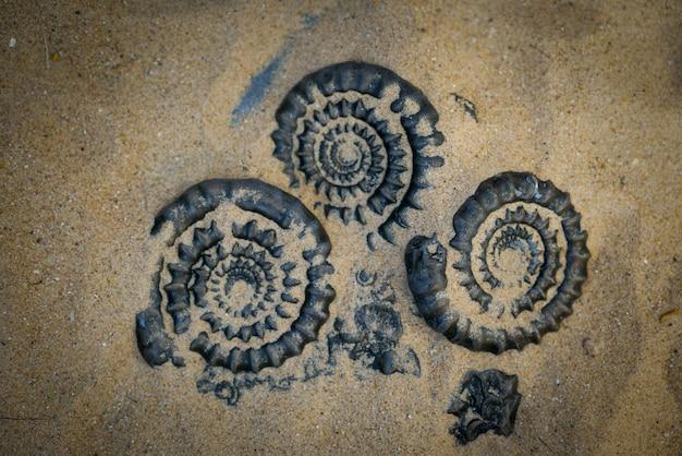 Ammonite fossile pour l'industrie des combustibles et du gaz