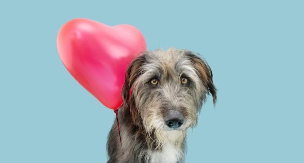 Amour de chien célébrant seul la saint-valentin avec un ballon rouge