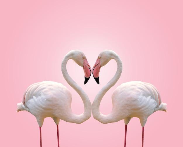 Amour concept forme coeur de flamant couple sur fond rose