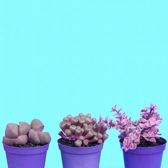 Amoureux des cactus, art conceptuel minimal. ensemble de cactus dans un pot