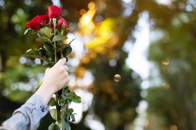 Les amoureux donnent des roses rouges le jour du valetine
