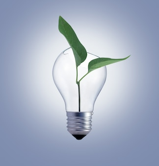 Ampoule avec plante verte sur gris